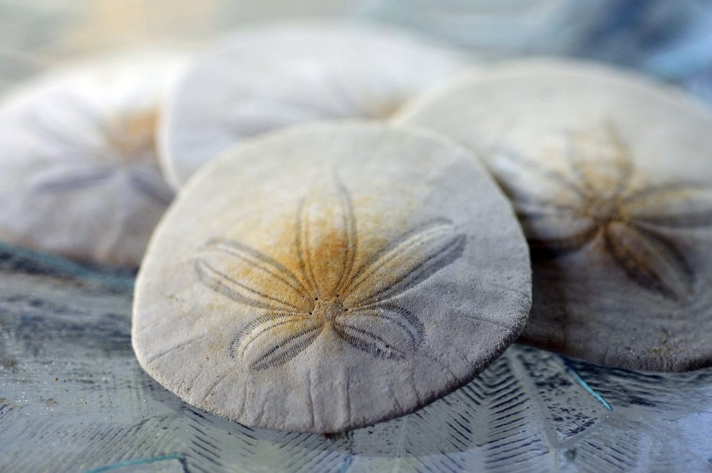 The Bahamas's central bank put its digital currency on its official balance sheet in April