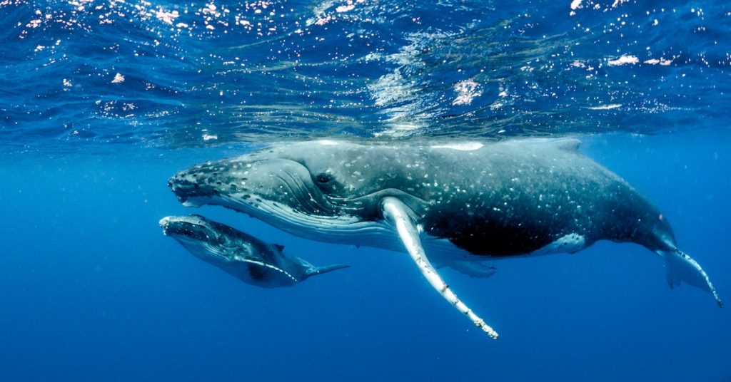 Number of People Holding Lots of Bitcoin Surges in Rare 'Whale-Spawning Season'